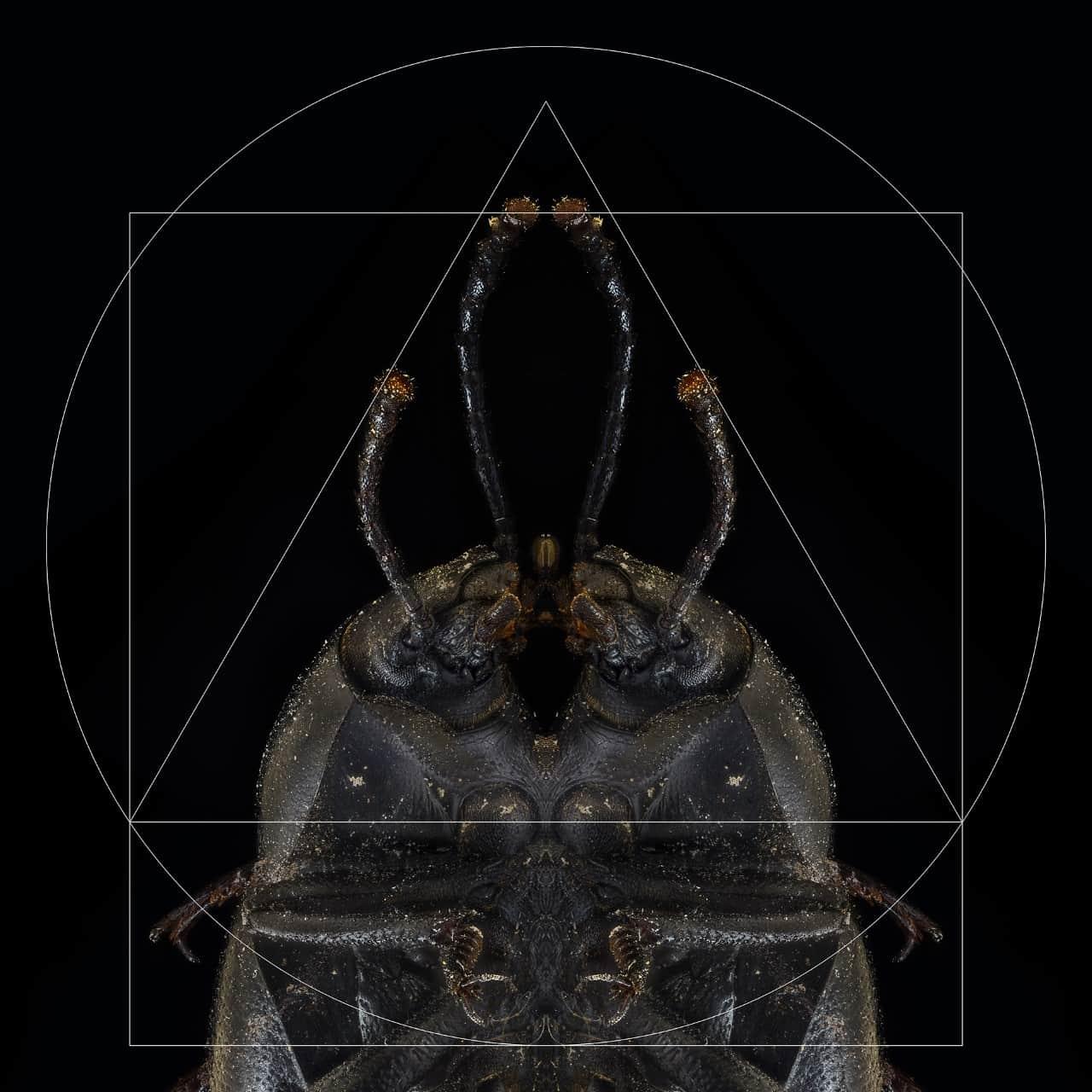 marco-antonio-lara-pinacate