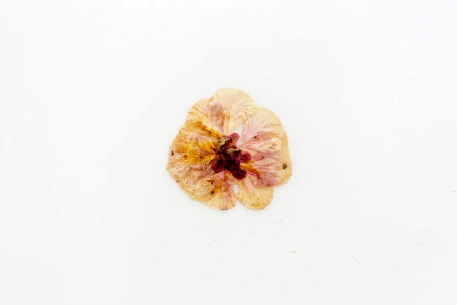 omar-rosales-naturaleza-viva-detalle